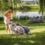 Minischweine, Oberpfälzer Wald